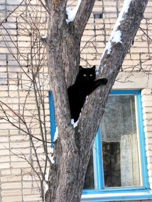 Фото дня от 7 декабря 2013 г. г. Автор: Эльвира Файзутдинова