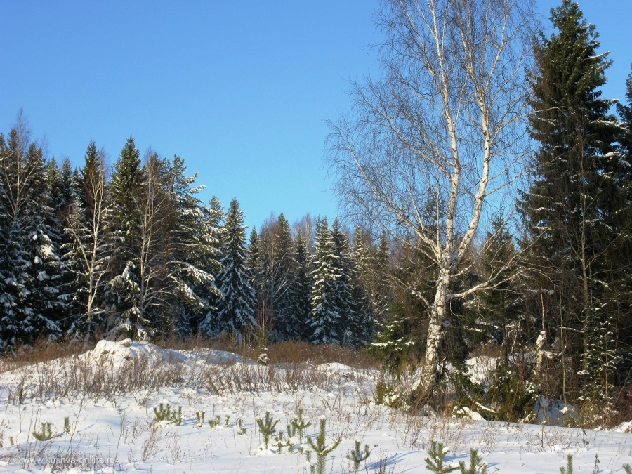 Фото дня от 30 декабря 2013 г. г. Автор: Эльвира Файзутдинова