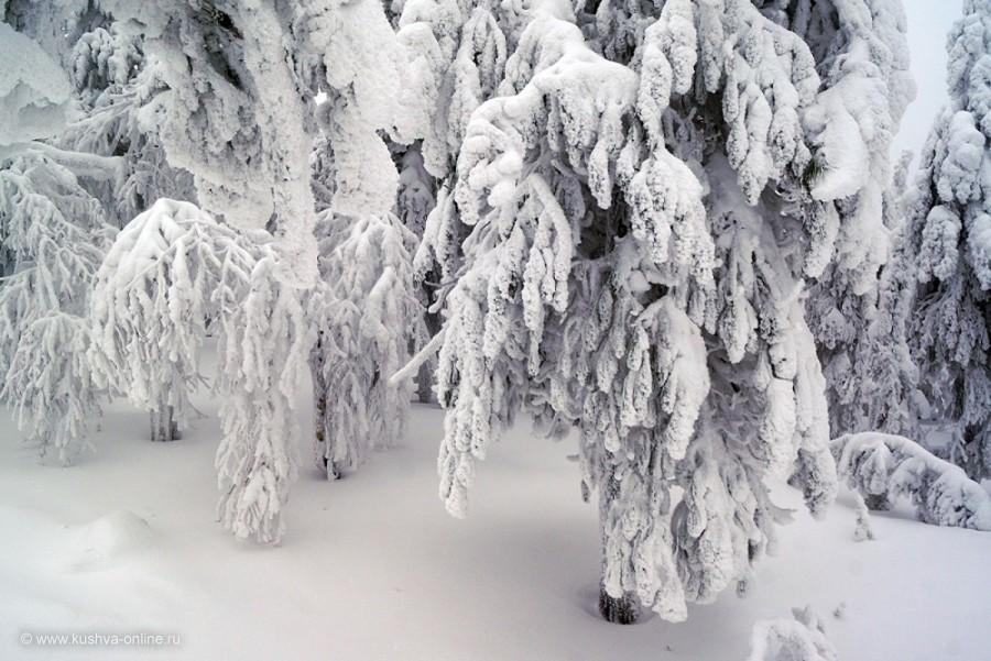 Фото дня от 26 января 2014 г. г. Автор: Елена Строганова