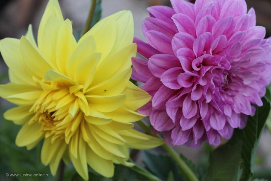 Фото дня от 1 сентября 2014 г. г. Автор: 89630399077