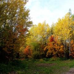 Осень золотая. Где-то под Кушвой. © Otrada