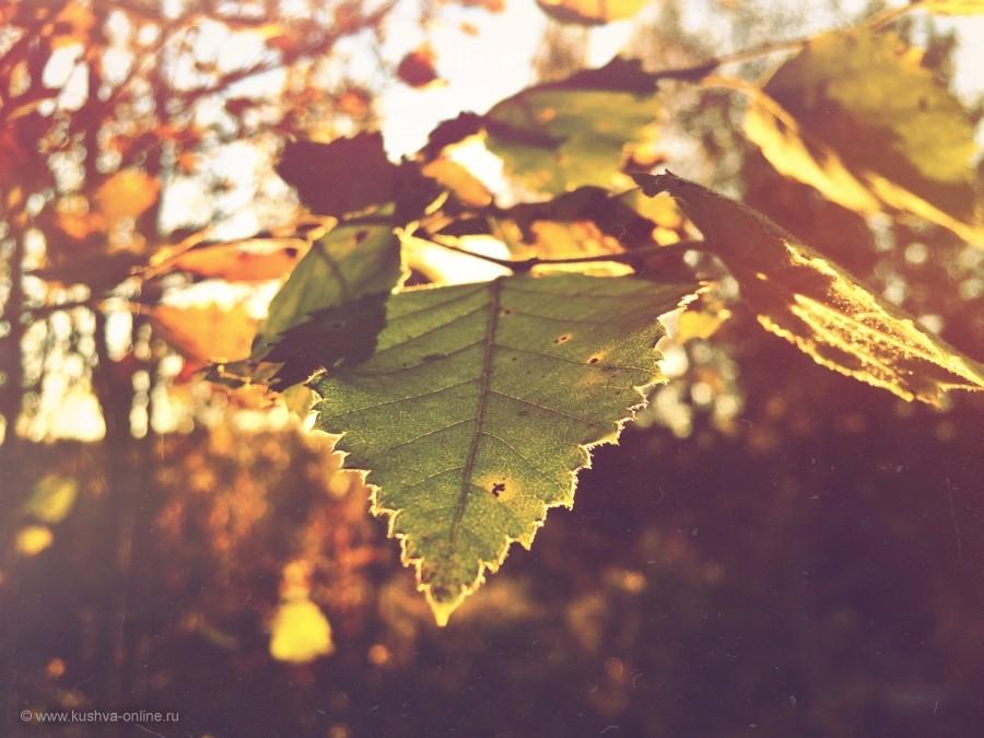 Фото дня от 8 октября 2014 г. г. Автор: Иван Садков