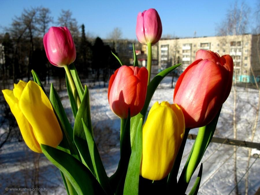 Фото дня от 15 марта 2015 г. г. Автор: Эльвира Файзутдинова