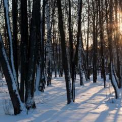 Вечерний парк © Денис Мельников
