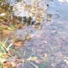 """водная гладь карьера (аномалия, недалеко от сада """"Дачный""""), фото сделано 3 сентября © Ольга"""