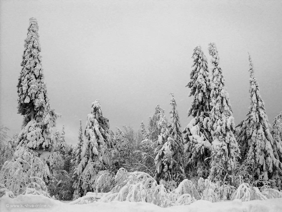 Фото дня от 25 ноября 2019 г. г. Автор: Алексей Лукин