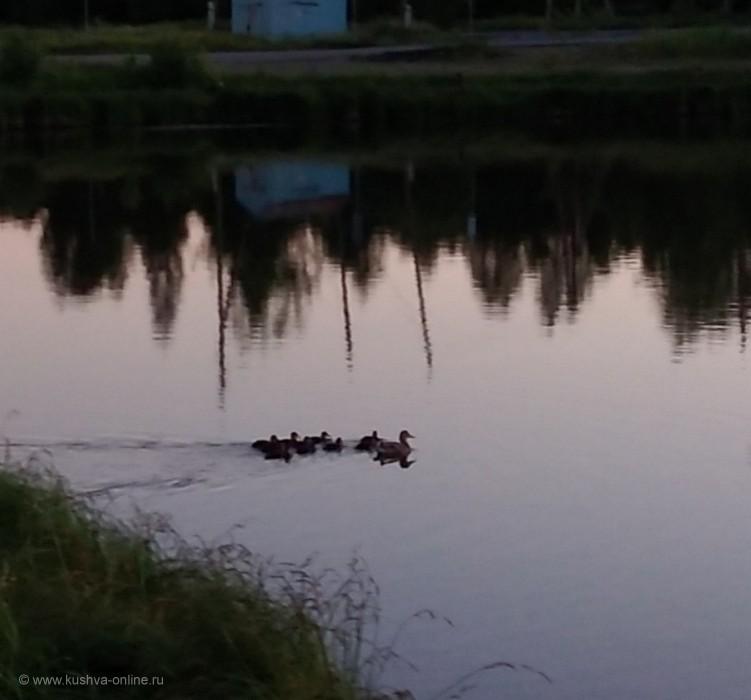 Фото дня от 18 июня 2020 г. г. Автор: Ольга Сидорова