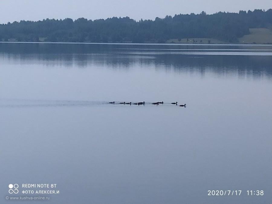 Хорошо плывут чайки... Как утки... © Алексей Иванов