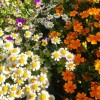Осенние краски, самые яркие, теплые, в них солнце и осколки лета! © Svetlana70
