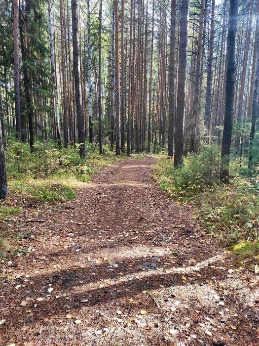 Осенний сентябрьский лес. © Svetlana70
